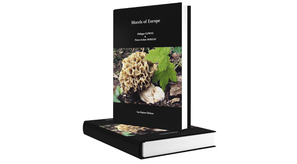 Indiegogo Campaign for Morels of Europe